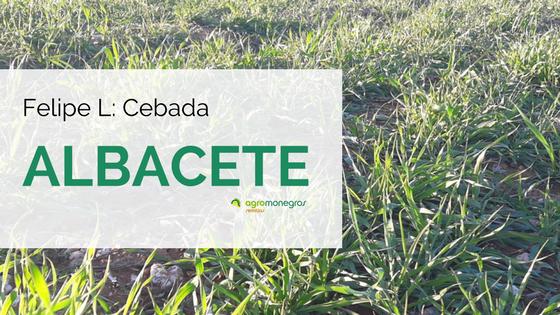 Cebada-Albacete_FelipeL