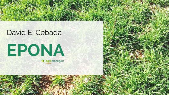Cebada-Epona_DavidE