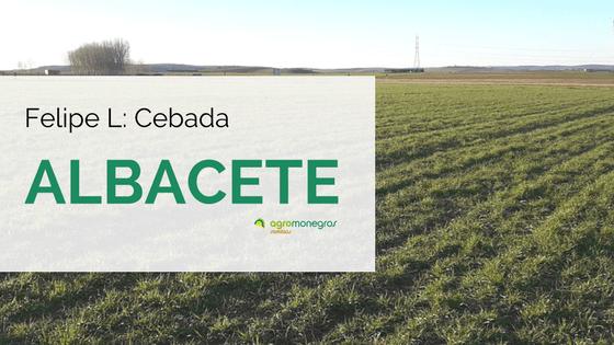 Felipe-L_cebadaalbacete2 (1)