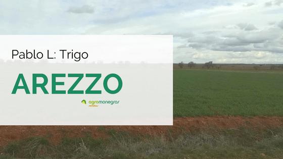 Pablo-L_Trigo-arezzo
